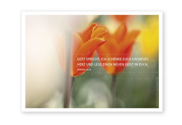Merle Neumann gestaltet die Jahreslosung 2017 – Gott spricht: Ich schenke euch ein neues Herz und lege einen neuen Geist in euch. Hesekiel 36,26